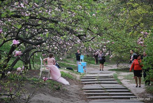 Ботанічний сад імені Гришка Цвітуть магнолії InterNetri  Ukraine 203