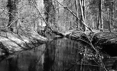 Cold river (Rosenthal Photography) Tags: landschaft bnw schwarzweiss asa200 35mm wald städte ff135 zeven ahe 20180401 rodinal15021°c10min infrarot ilfordsfx rotfilter olympus35rd analog bw dörfer siedlungen coldriver cold river nature april spring march landscape blackandwhite mood olympus olympus35 35rd fzuiko zuiko 40mm f17 ilford spx200 spx redfilter red filter rodinal 150 epson v800