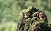 Surveying the Woodlands (CozzD) Tags: ewok wicket paploo endor forest moon return jedi rotj star wars ewoks