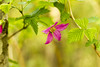 Forest flower (Renalicious) Tags: canon7d ef50mmf18 flower macro forest green purple leaves