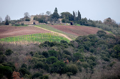 Toscana  托斯卡尼 (MelindaChan ^..^) Tags: toscana italy 意大利 托斯卡尼 landscape rural chanmelmel melinda melindachan mel house field vinery tree plant green nature