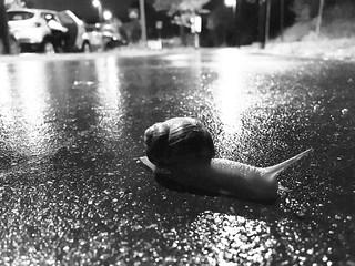 It's raining snails !