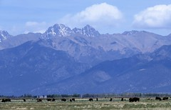 At Home on the Range (Patricia Henschen) Tags: sanluisvalley sangredecristo mountains bison clouds spring colorado greatsanddunesnationalpark mosca rural countryside backroad medano ranch historic thenatureconservancy
