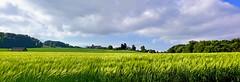 Douceur de la campagne (Diegojack) Tags: lemontsurlausanne vaud suisse d7200 campagne paysages panorama blés assemblage ciel nuages groupenuagesetciel