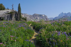 Shelf Trail (akortrey) Tags: grandtetonnationalpark tetoncresttrail wyoming wilderness mountains wildflowers deathcanyon
