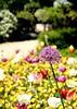 Lente @Kruidtuin Leuven (Kristel Van Loock) Tags: leuven kruidtuin kruidtuinleuven leuvensekruidtuin louvain hortusbotanicuslovaniensis lovanio lovaina löwen visitleuven atleuven seemyleuven loveleuven leuveninbeeld lente 2018 6mei2018 06052018 botanicalgarden botanischetuin botanischergarten ortobotanico jardinbotanique jardinbotaniquedelouvain jardimbotanico giardinobotanico spring spring2018 primavera printemps springtime vlaanderen vlaamsbrabant visitvlaamsbrabant visitvlaanderen visitflanders visitbelgium visitflemishbrabant brabantflamand brabantefiammingo flanders fiandre flandre flemishbrabant belgium belgique belgien belgië belgica belgio drieduizend leveninleuven