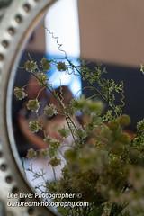 EdinburghCastle-18050843 (Lee Live: Photographer) Tags: amandaross brideandgroom cannon ceremony champagne edinburgh edinburghcastle exchangeofrings flowers hotweather keepoffthegrass leelive leelivephotographer liamross maybankholiday minister ourdreamphotography robertthebruce romanesquearchitecture romanticwedding royalchapelinthecastle saintmargaretofscotland scotland scottishkirk scottishweddingphotography signingoftheregister sonya7rii sonyfef1485mmgm stmargaretschapel stainedglasswindows summer sunny thekiss thewitchery weddingcar weddingflowers weddingphotography weddingrings williamwallace privatechapel wwwourdreamphotographycom