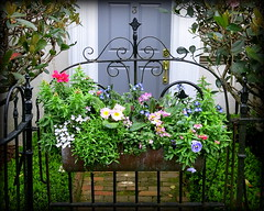 Entry gate planter, Lamboll Street, Charleston, SC (Spencer Means) Tags: gate flower planter box wrought iron entry entrance door doorway walk walkway lamboll street charleston sc southcarolina brick blue