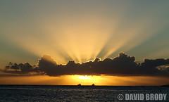 P9080257 (dbrodsky9) Tags: honolulu hawaii unitedstates us