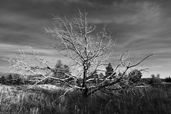 bare (Tomás Harrison Fotos) Tags: jemezmountains supervolcano nikon beautifullight roadtrip nationallabs snow lanl afsdxzoomnikkor1755mmf28gifed ngc tree landscape availablelight afternoon winter color d7100 nm4 nm blackandwhitelosalamos austin tx usa
