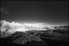 Infrared (Jonas Thomén) Tags: infrared infraröd svartvit monochrome blackandwhite cliffs klippor skog forest beach strand rocks stenar sky himmel