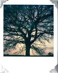 Polaroid Week Day Seven 1/2 (Film by Emily) Tags: sx70 polaroid polaroidweek polaroidlandcamera polaroidoriginals instantfilm instant emilyjacksonfilm colourfilm