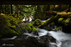 Almost Panther (Matt Straite Photography) Tags: panther water waterfall river stream creek hike cave color landscape washington columbia columbiarivergorge gorge canon