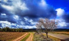 Spring and tree (Peideluo) Tags: spring tree landscape nature cloudscape clouds carretera árbol cielo campo hierba paisaje