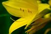 DSC04534.jpg (chagendo) Tags: sony sonyalpha7ii pflanzen blumen natur outdoor makro makrofotografie 90mm