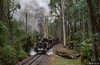 Fielder Forest (Dobpics O'Brien) Tags: 12a locomotive engine train rail railway railways steam victorian victoria vr narrow na gauge gembrook fielder forest pbr puffingbilly puffing pbps pass billy