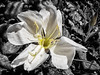 spring Durango flower (maryannenelson) Tags: colorado spring snow durango flowers plants