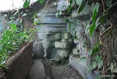 Екзотаріум Ботанічного саду імені Гришка, Київ InterNetri  Ukraine 09