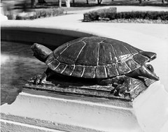 Turtle on the Gage Park Fountain (Brian Copeland Photography) Tags: ilforddeltaprofessional100 selfdeveloped northamerica animals omega45d rodenstocksironarcopal1210mmf56 ilford blackandwhitefilm 4x5 film architecture fountain stillcamera photogear orangefilter gagepark reptiles viewcamera filter turtle hamilton ontario canada dilutionb blackandwhite largeformat kodakhc110 copal1 copalno1 ilfordfilm omega rodenstock sironar toyo animal bw blackwhite building construction lensfilter monochrome reptile wildlife ca