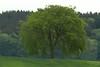 A dreary Friday!!!     Ein trüber Freitag!!! (Renata1109) Tags: gras landschaft feld himmel wald baum tree heimat mai laub bayern deutschland laubbaum germany bavaria grün green wood