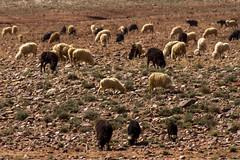 2018-3921 (storvandre) Tags: morocco marocco africa trip storvandre marrakech marrakesh valley landscape nature pass mountains atlas atlante berber ouarzazate desert kasbah ksar adobe pisé