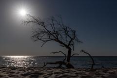 """""""Sonnenfänger"""" (jmwill2005) Tags: meer ostsee darss fischland naturpark nationalpark vorpommersche boddenlandschaft ahrenshoop prerow strand strandgut treibgut sand küste abbruch abtragung sonnenuntergang himmel sonne zingst mecklenburgvorpommern"""