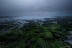It was a minus low tide. (Masako Metz) Tags: lowtide green seaweed rocks ocean sea beach nature landscape seascape waterscape oregon coast pacific northwest usa america outdoor shore shoreline coastline coastal weather cloudy