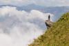 _Y2U9199.0716.Tà Xùa.Bắc Yên.Sơn La. (hoanglongphoto) Tags: asia asian vietnam northvietnam northwestvietnam landscape scenery vietnamlandscape vietnamscenery vietnamscene flanksmountain cloud clouds sunlight sunny morning sunnymorning people rock sunnyweather landscapewithpeople canon canoneos1dx canonef100400mmf4556lisusm tâybắc sơnla bắcyên tàxùa phongcảnh người phongcảnhcóngười sườnnúi mây nắng buổisáng nắngsớm tảngđá minimalisme one 1 một