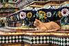 Temple Cat (Matt Molloy) Tags: mattmolloy photography watphrachetuphonvimolmangklararmrajwaramahaviharn watpho temple orange cat ceramic tiles flowers squares colourful sculpture detailed intricate art old architecture prang phranakhon bangkok thailand lovelife