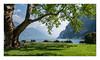 Riva del Garda (philturp) Tags: lac parcetjardin lacdegarde tree lakegarda arbre italy lagodigarda plantes italie montagne rivadelgarda trentinoaltoadige it paysage landscape ciel