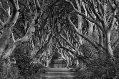 Dark Hedges (efgepe) Tags: 2018 irland lightroom mai dark hedges darkhedges nik silverefexpro bw sw schwarzweiss blackwhite 200mm