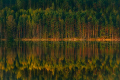 team relax - cause the harmony is so sweet (mood1975) Tags: trees tree lake nature water forest fog lights