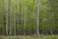 Green wall (baro-nite) Tags: centralnorthcarolina enoriver cornus trees pentax k1 pixelshift mirex tiltshift smcpentaxa645macro14120mm iridientdeveloper