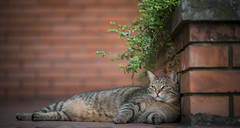 Ika (Katarina Drezga) Tags: cats cat catphotography petphotography pets pet felines domesticcat animals
