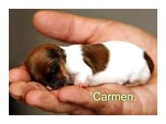 FELIZ SÁBADO ANIMAL AMIG@S. (CarmenCordero1949) Tags: carmen