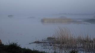 Morgens in Norderstapel an der Treene; Stapelholm (1)