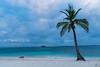 Solo Palmera - Archipiélago de San Blas (carlosbenju) Tags: naturaleza nature verde green mar sea oceano ocean barco ship palmera palm agua water playa beach