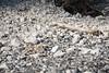 Chalk (BlossomField) Tags: chalk sassnitz mecklenburgvorpommern deutschland deu