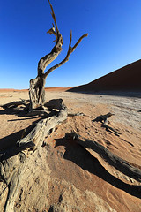 Dead tree in Deadvlei - Sossusvlei - Namib desert - Namibia (lotusblancphotography) Tags: namibia namibie africa afrique desert tree dunes deadvlei sossusvlei