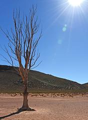 Arid (Vide Cor Meum Images) Tags: mac010665yahoocouk markcoleman markandrewcoleman videcormeumimages vide cor meum nikon nikkor28300 d750 south africa african tree scorched earth rainfall arid drought desert aquila game drive safari trees