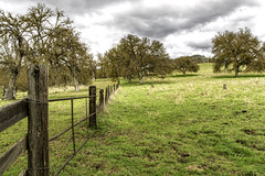 At the Crossroad (punahou77) Tags: fresno foothills fresnocounty landscape fence field oaktree california clouds rain stevejordan storm punahou77 nature nikond500 nikon grass green