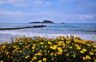 Yellow Flowers, a jetty and and island.