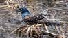 Splish Splash, I was takin' a bath... (Wes Iversen) Tags: brighton kensingtonmetropark michigan milford tamron150600mm birds grasses nature splashes water