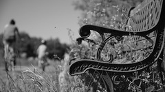 Fly on by (Parchman Kid (Jerry)) Tags: unused un used bench rest overgrown nature monochrome black white parchmankid sony a6500 drive by flyby