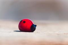 ladybug (hey ~ it's me lea) Tags: ladybug glass red bug tiny inmybackyard actuallyonmybackdeck idontlikeplayinginourbackyard