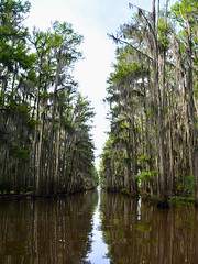 Uncertain - Go Straight (Drriss & Marrionn) Tags: uncertain uncertaintx texas usa outdoor landscape landscapes caddolake lake water tree trees cypresstree reflection green spring moss tillandsiausneoides spanishmoss forest wood sky river