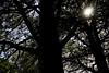 Saklanan ışık (duygu.gunay1) Tags: ağaç tree güneş sun yaprak leaf kontrast contrast afternoon gündüz streetphotography