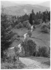 Zapolanka (Piotr Skiba) Tags: beskidy beskid żywiecki zapolanka road mountains trees afternoon landscape bw poland pl piotrskiba kodaktmax400 eos path darkroomprint