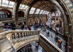 Natural History Museum, London (R.o.b.e.r.t.o.) Tags: charlesdarwin museodistorianaturale londra london inghilterra regnounito england unitedkingdom people nikond850 nikkor1424 granbretagna greatbritain architettura architecture freehand