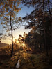 First Light at Thursley Common (iPhone) (jonnyp-photo) Tags: iphone landscape trees sunrise light